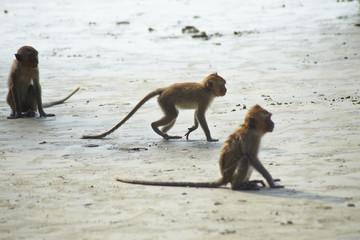 Monkey VIII