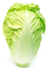 Fresh chinese cabbage
