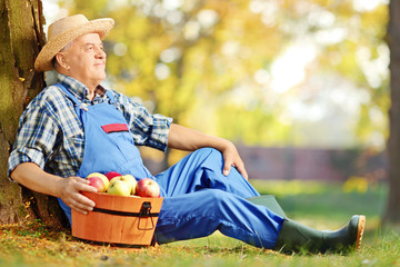 Male worker with basket of apples sitting in orchard