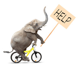 African elephant on a bike holding protest sign.