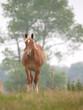 Single Horse in Spring Paddock
