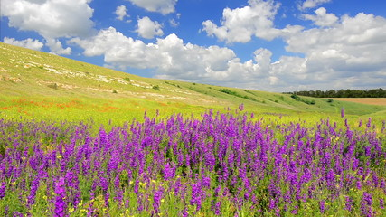 Wildflowers sways on a wind on the meadow against a blue sky