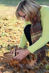 Middle-aged woman gathering chestnuts