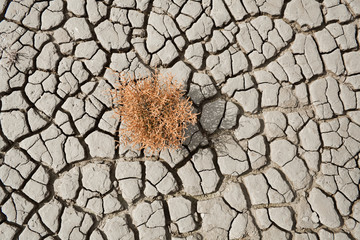 red succulent growing on cracked earth