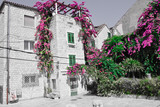 Flowering small square in Split, Croatia