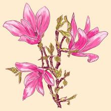 magnolia branche