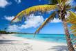 Palm tree at idyllic tropical beach