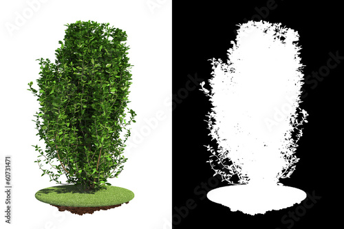 Green Bush Isolated on White Background.