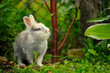 Cute Fluffy Rabbit in Summer Garden