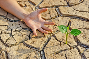 hand trying to reach a tree growing on cracked earth