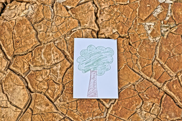 A picture of trees on cracked earth