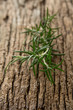 Sprigs of rosemary on an old board.
