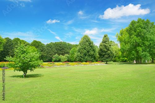 Fotobehang Tuin Beautiful meadow in the park
