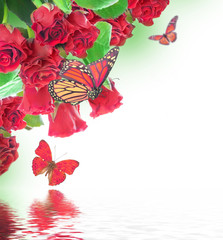 A bouquet of red roses, floral background and  butterfly