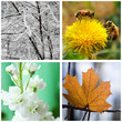 Nature in winter, spring, summer and autumn.Collage.