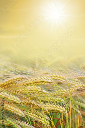 canvas print picture goldenes Erntefeld mit strahlender Sonne