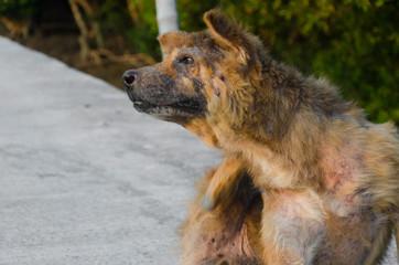 Abandoned stray dog on the road.