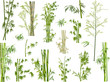 isolated large set of green bamboo branches - 60743607