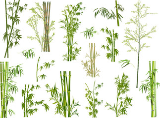 isolated large set of green bamboo branches