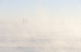 Industrial crane in mist poster