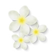 White flowers for Your design