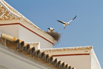 Stork jump