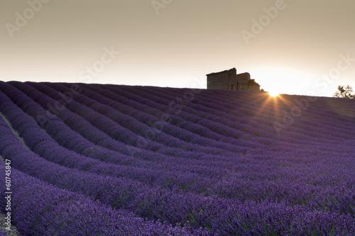 Sunrise over lavender field