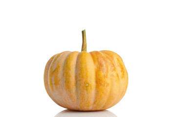 Big yellow pumpkin on white background