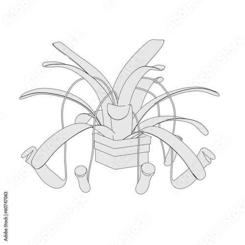cartoon image of carnivorous plant