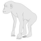 cartoon image of chimpanzee monkey