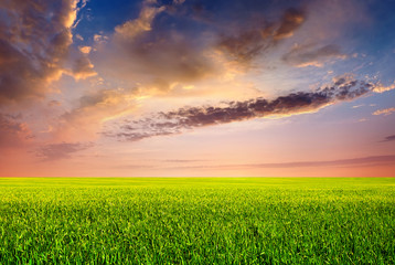 Field and sky. Agricultural landscape