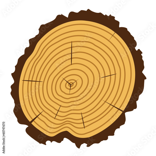 vector wooden cut of a tree log