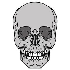 Human Skull 04