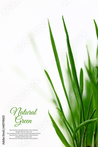 Few green blades of grass isolated on white