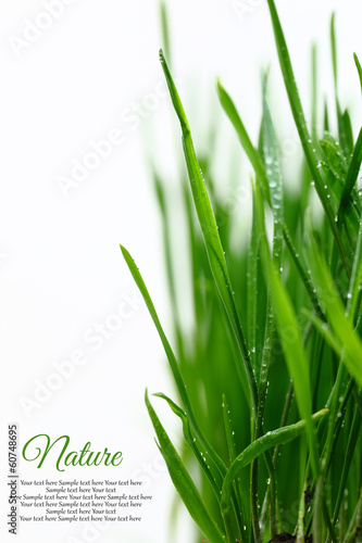 Few green blades of grass with water droplets isolated