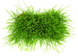 Patch of green grass isolated on white background