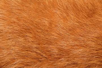 Close up of Brown fur texture background