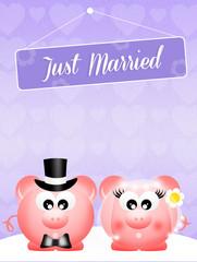 Wedding of pigs