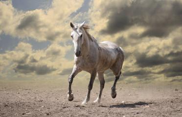 white horse runs