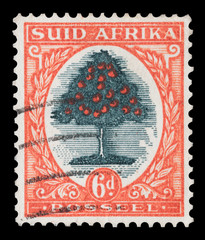 Vintage South African orange fruit tree mail stamp, circa 1926