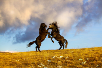 Fight two wild horses at the top of the hill