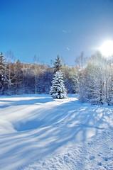 paysage hivernale sous le soleil