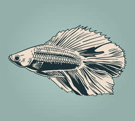 Vector vintage illustration of  little veil fish