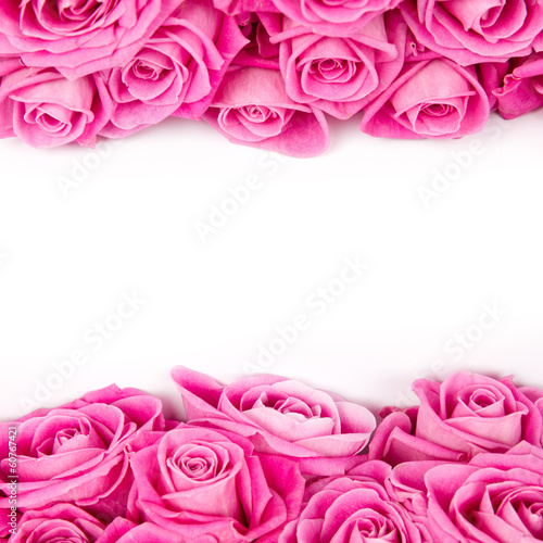 rose-kwitnie
