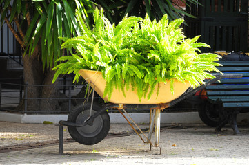 Wheelbarrow full of Plants