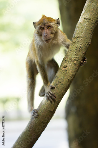Angry Monkey sitting on a tree