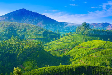 beautiful landscape of the tea plantations in India, Kerala, Mun
