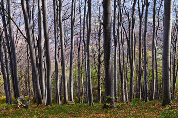 Dense forest at Homolje mountains on a sunny autumn day