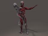 Inner skeleton and musculature man divide poster