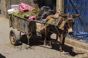 Esel mit Muellwagen in Marokko
